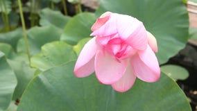 De illustratie van de bloemZen van Lotus Royalty-vrije Stock Foto's