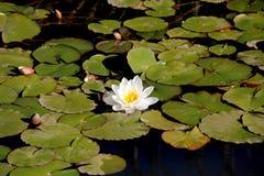 De illustratie van de bloemZen van Lotus Stock Afbeeldingen