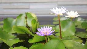 De illustratie van de bloemZen van Lotus stock videobeelden