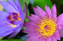 De illustratie van de bloemZen van Lotus Stock Foto