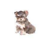 De illustratie van de hond yorkie watercolor Royalty-vrije Stock Afbeeldingen