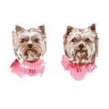 De illustratie van de hond yorkie watercolor Royalty-vrije Stock Afbeelding