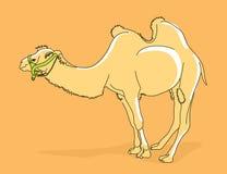 De illustratie van de kameel stock illustratie