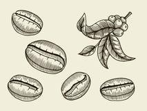 De illustratie van de koffietak royalty-vrije illustratie