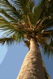 De illustratie van de palm Royalty-vrije Stock Fotografie