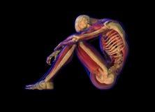 De illustratie van de röntgenstraal van Menselijke anatomie en skelet Stock Foto