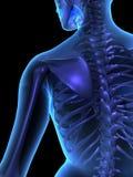 De illustratie van de röntgenstraal van vrouwelijke menselijk lichaam en skelet Stock Afbeeldingen