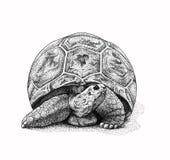 De Illustratie van de schildpad Royalty-vrije Stock Foto