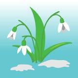 De illustratie van de sneeuwklokjebloem Royalty-vrije Stock Afbeelding