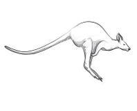 De illustratie van de tekeningskangoeroe het springen Royalty-vrije Stock Afbeelding