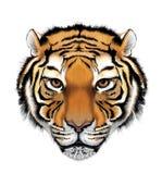 De Illustratie van de tijger stock illustratie