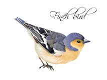 De illustratie van de vinkvogel Stock Foto's