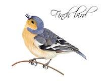 De illustratie van de vinkvogel Stock Afbeeldingen