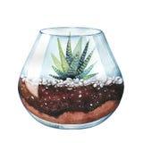 De illustratie van de waterverf Gestreepte cactus Gestreepte Haworthia Terrar stock illustratie