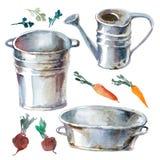 De illustratie van de waterverf Groente, radijzen, bieten, peterselie, gr. Stock Foto's