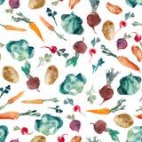 De illustratie van de waterverf Peterselie, kruid, bieten, radijs, cabbag Stock Afbeelding
