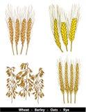 De illustratie van graangewassen Stock Afbeeldingen