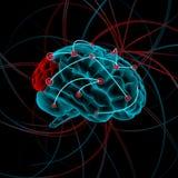 De illustratie van hersenen Stock Foto's