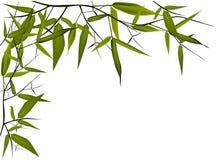 De illustratie van het bamboe Stock Foto
