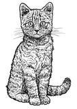 De illustratie van het gestreepte katkatje, tekening, gravure, inkt, lijnkunst, vector Stock Foto's