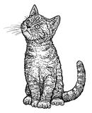 De illustratie van het gestreepte katkatje, tekening, gravure, inkt, lijnkunst, vector Royalty-vrije Stock Foto's