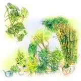 De Illustratie van de het Kleurpotloodschets van de Achtertuintuin Royalty-vrije Stock Afbeelding