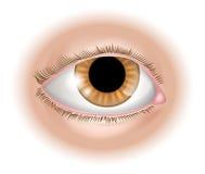 De illustratie van het ooglichaamsdeel Stock Foto's