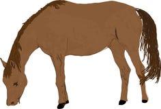 De illustratie van het paard Royalty-vrije Stock Fotografie