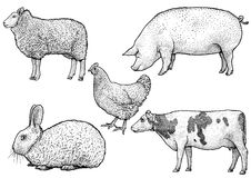 De illustratie van landbouwbedrijfdieren, tekening, gravure, inkt, lijnkunst, vector Royalty-vrije Stock Afbeelding