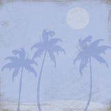 De Illustratie van palmen   Royalty-vrije Stock Afbeelding
