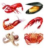 De illustratie van de waterverf Reeks van zeevruchten Garnalen, mossel, kanker, zeekreeft, pijlinktvis Stock Fotografie