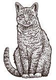 De illustratie van de zittingskat, tekening, gravure, inkt, lijnkunst, vector Stock Foto