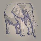 De illustratieolifant van de handtekening status Stock Afbeeldingen