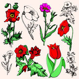 De illustratiereeks van de bloem vector illustratie