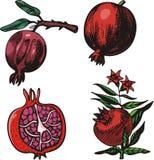 De illustratiereeks van het fruit