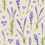 De illustraties van de lavendelbloem Royalty-vrije Stock Afbeelding