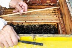 De imker bereidt oogsthoning van de bijenkorf voor Stock Fotografie