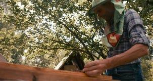 De imker in speciale hoedensluier werkt met bijenkorven in de tuin Geschoten op de RODE camera stock video