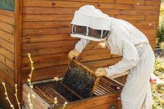 De imker trekt van de bijenkorf een houten kader met honingraat terug Verzamel honing Imkerijconcept stock afbeeldingen