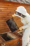 De imker trekt van de bijenkorf een houten kader met honingraat terug Verzamel honing Imkerijconcept stock foto's