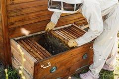 De imker trekt van de bijenkorf een houten kader met honingraat terug Verzamel honing Imkerijconcept stock foto