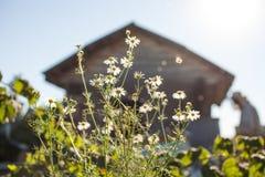 De imker werkt met bijen en bijenkorven aan de bijenstal Stock Foto's