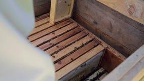 De imker werkt met bijen en bijenkorven aan de bijenstal stock video