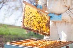 De imker werkt met bijen en bijenkorven aan de bijenstal Imker op bijenstal Stock Afbeelding