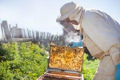 De imker werkt met bijen en bijenkorven aan de bijenstal Imker op bijenstal Royalty-vrije Stock Foto