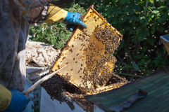 De imker werkt met bijen en bijenkorven aan de bijenstal Imker op bijenstal Stock Foto