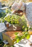 De imker werkt met bijen en bijenkorven aan de bijenstal Imker op bijenstal Stock Afbeeldingen