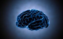 De impulsen van hersenen Neuronensysteem Menselijke anatomie het overbrengen van impulsen en het produceren van informatie Stock Foto