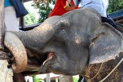 De Indische olifant vervoert mensen op zijn rug op Koh Chang Island Stock Afbeeldingen