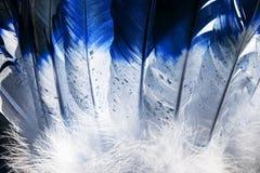 De Indische veren van Native American in blauw en wit royalty-vrije stock afbeeldingen